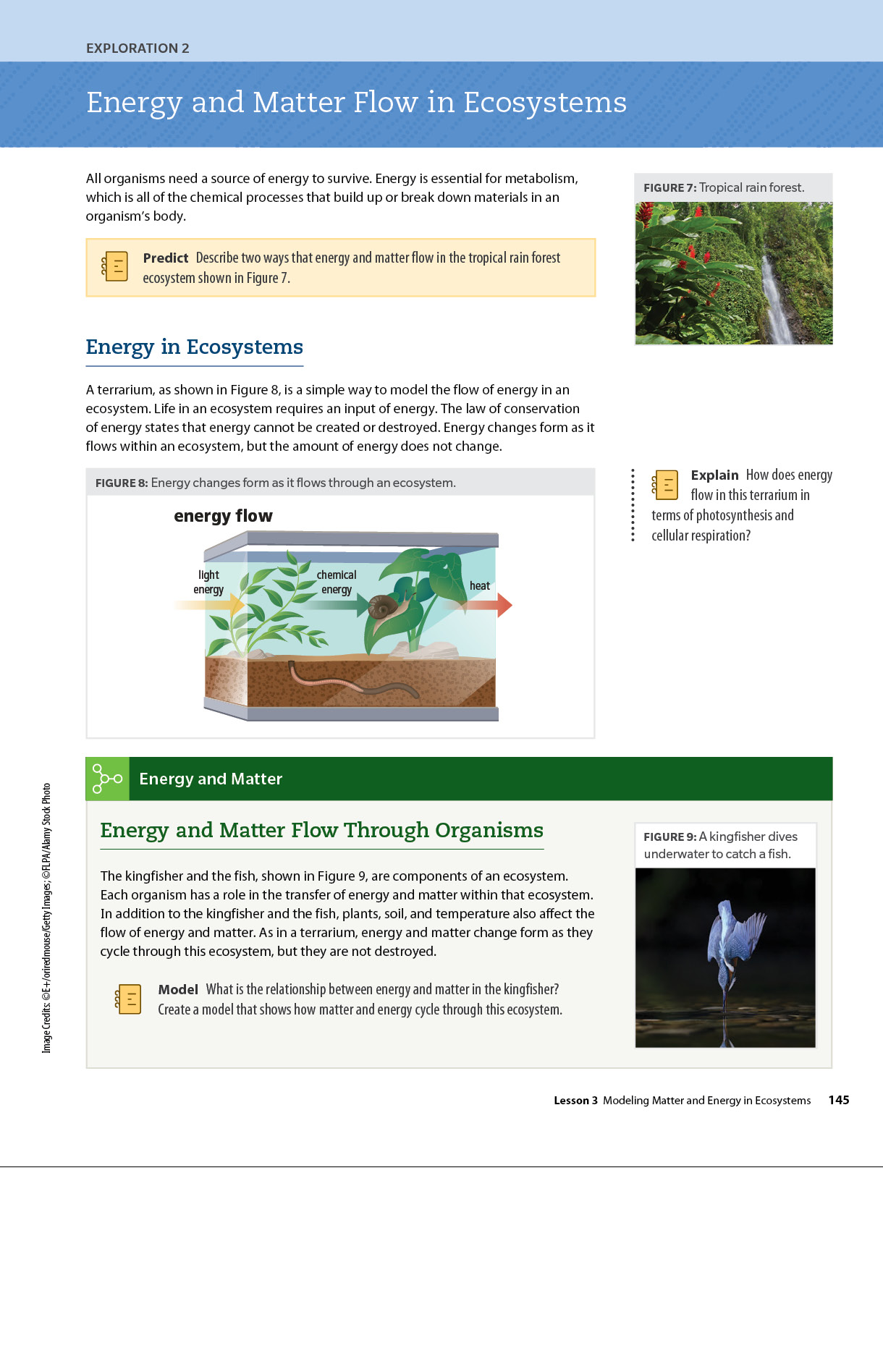 Sample biology page Dimensions Biology book about energy and matter flow in ecosystems.